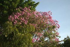 Jataí, Goiás, Brasil (Proflázaro) Tags: brasil goiás jataí parqueecológicodiacuy parque cerrado natureza ecologia árvore flor jardim