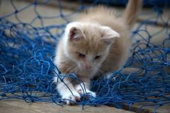 Kitten mayhem :) (Captions by Nica... (Fieger Photography)) Tags: kitten kittencuteness cute cuteness adorable adorablekittens cat catmoments canada quebec blue fuzziness fuzzykitten