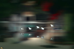 Fly away home (Otacílio Rodrigues) Tags: garças herons panning reflexos reflections voo flying rio river água water casa house natureza nature aves birds pássaros resende brasil oro