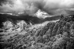 Valle del cocora (JuanEsOc) Tags: byn bn blackandwhite blancoynegro harley davidson