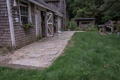 Gardens Summer 2017 (blackseal35) Tags: 2017 24105l canon canong7x ma rehoboth summer backyard barn daylily evening ferns garden gardens goats home hosta leaves plantings plants rockgarden