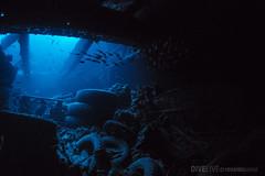 Red Sea (Dive Live) Tags: vermelho red sea dive divin nauticam mar g7x emperor egito uwl04 reef live aboard