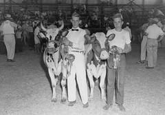 1094 (kentuckyffa) Tags: sae 55 junior grand champion ayrshire somerset dairy show russell county eubank