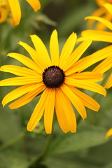Flower (historygradguy (jobhunting)) Tags: easton ny newyork upstate washingtoncounty flower plant yellow