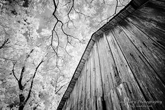 Old Wood and Summer Leaves (Paul Cory) Tags: afternoon alienskin availablelight barn blackandwhite blackandwhiteportfolio bluesky camera clouds exposurex2 fujicamera fujifilmxa1720nmir irportfolio landscape lens lighting northcarolina portfolio postprocessing rokinon rokinonlens rural samyang12mmf20ncs samyanglens season sky structure summer timeofday tree unitedstates infrared leaves exif:lens=120mm camera:model=xa1 exif:focallength=12mm exif:isospeed=400 geolocation exif:make=fujifilm camera:make=fujifilm exif:aperture=ƒ10 exif:model=xa1