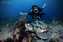 Tartaruga (Randi Ang) Tags: turtle seaturtle green greenseaturtle greenturtle gili air giliair islands giliislands lombok indonesia underwater scuba diving dive photography wide angle randi ang canon eos 6d fisheye 15mm