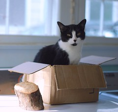 Tina in a box (rootcrop54) Tags: tina tuxedo masked black white cat cardboard box dryer laundry room neko macska kedi 猫 kočka kissa γάτα köttur kucing gatto 고양이 kaķis katė katt katze katzen kot кошка mačka maček kitteh chat ネコ