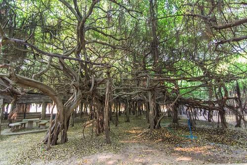 phimai - thailande 54