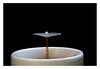Coffee & milk (Christin Tietjen) Tags: pluto plutotrigger drops coffee milk macro splash