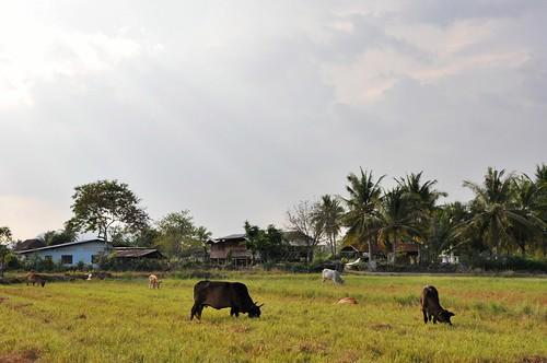 parc national sam roi yot - thailande 90