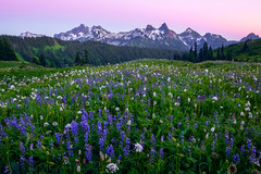 Tatoosh Range and Mount Rainier Wildflowers (kevin mcneal) Tags: washington washingtonstate pacificnorthwest mountrainiernationalpark nationalpark mtrainier cascademountains mountains wildflowermeadows sunset clouds weather trails hiking wildflowerhikes washingtonstatetrails highestmountainofthecascaderange pacificnorthwestwildflowerhikes mountainsofthepacificnorthwest nearseattle mostprominentmountaininthecontigiousunitedstates volcano glaciers glacierice washingtonstatenationalparks tourism walkingtrails summerhiking washingtontourism kevinmcnealphototours nikon nikond800kevinmcneal kevinmcneal kevinmcnealphotography kevinmcnealphotographyphotographytours nikond810 singhrayfilters longmire unitedstates