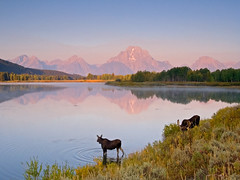 Moose on the Loose (Jeffrey Sullivan) Tags: teton national sullivan grand park grandtetonnationalpark landscape nature travel photography wyoming united states road trip usa canon photo copyright jeff 2009 september
