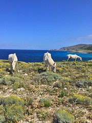 Wild horses @ Arta Coast, Mallorca, Spain ([ PsycBob ]) Tags: mallorca spain espana spanien küste coast seashore pferde horses wild wildpferde blau blue bleu landschaft landscape