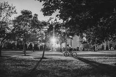 Sunset (Cagdas Ozturk) Tags: bike biker sunset sunrise trees green chicago navy pier city urban street photography black white monochrome bw bnw canon eos 80d