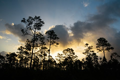 darker than light (almostsummersky) Tags: spring sunrise nationalpark evergladesnationalpark florida trees pinegladeslake sun sky forest morning clouds everglades pines slashpine longpinekeytrail swamp wetland unitedstates us