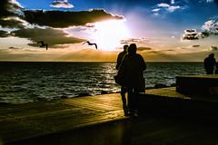 Sunset by the ocean (Maria Eklind) Tags: sunset water sweden outdoor västrahamnen mås summer sea ocean city goodnightsun brygga sundspromenaden malmö boardwalk clouds sky himmel solnedgång sunlight seagull malmoe harbour öresund skånelän sverige se beach