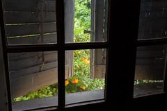 Grasse, Fragonard Oranges (weggum) Tags: france grasse fragonard oranges tree windown shutters parfum