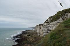 Matin en Normandie (lorethouvenin) Tags: normandie normandy paysage landscape étretat falaise cliff outdoor oiseau wildlife photography nature clouds