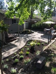 Quigg_Smith_Danville (bdlmarketing) Tags: quigg smith danville frontyard walkway steps retainingwall hardscape basalite artisansmooth positano paers paverstones droughttolerant landscape stonewallii lakeland