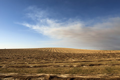 Empty Field and Smoky Sky (Curtis Gregory Perry) Tags: waldo hills oregon field farm smoke sky burn yellow blue could nikon d810 24mm landscape row furrow crop agriculture grass hay barren wasteland empty emptiness lonely loneliness horizon nothing null void