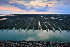 Oyster field (Vincent_Ting) Tags: 蘆竹溝 蚵田 倒影 reflections clouds 雲彩 oysterfield taiwan 台灣 tainan 台南 北門區 蘆竹溝漁港 fishingport sunset 夕陽 tide 潮汐 蚵架 water sea sky vincentting