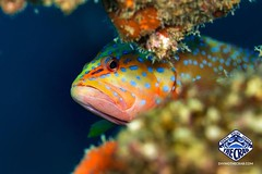 Photo (The Sands Kenya) Tags: diving scuba kenya diani beach africa underwater ocean