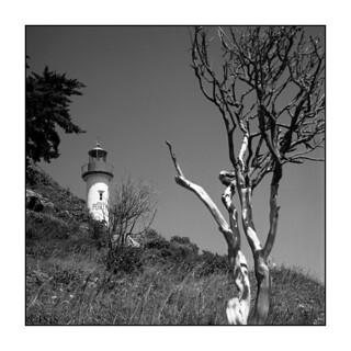 Le phare et l'arbre mort (Port-Manech, Finistère, juillet 2017)