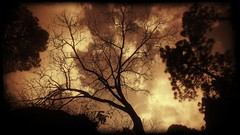 Creepy (tahir.121) Tags: trees clouds hdr sky nature shadows dark sunset evening summer forest weather random mobile photography winter