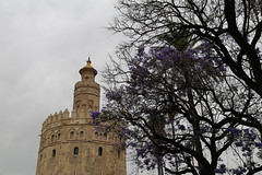 2017 SPM0216 Torre del Oro (Tower of Gold) in Sevilla, Spain (teckman) Tags: 2017 europe sevilla seville spain torredeloro andalucía es