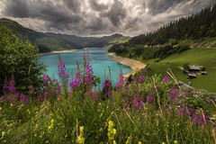 Late spring in broad daylight (Perez Alonso Photography) Tags: french alps flowers spring summer july lac lake roselend france francia landscpes daylight storm coming pure blue paisaje lago