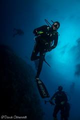 IMG_5984 (davide.clementelli) Tags: scuba underwater underwaterlife diving dive immersione portofino colori colors colore color fishes fish pesci
