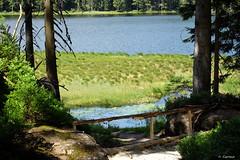 ArberSeeIdylle (H. Eisenreich) Tags: eisenreich hans fujifilm xt1 idylle zaun see trees wasser schwimmgras bavarianforest bayerischerwald nature lago bäume absperrung arbersee lake schwinggras bavaria bayern fence water