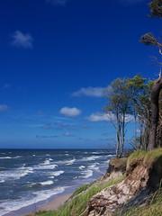 A shore (Darek Drapala) Tags: shore beach beauty sky skyskape baltic sea seashore seascape trees blue sunny lumix light landscape panasonic poland polska panasonicg5 nature