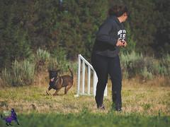 P7162599 (Songdog Studios) Tags: green dog neumond womensretreat 2017 k9 schutzhund ipo