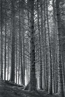 Naturally barcoded, Dartmoor.