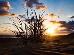 Coucher de soleil sur la Grande Côte [explored] (eric_marchand_35) Tags: jaune charentemaritime saintpalaissurmer sunset coucherdesoleil plante sable plage beach plant sand estuairedelagironde atlantique ocean sea mer