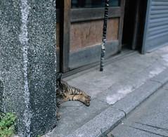 Gatekeeper (YUKIHAL) Tags: pentax67 smc p67 90mm f28 rdpiii fujifilm film provia100f 120 mediumformat analog 67 6x7 pentax cat