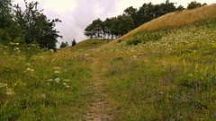 Morning walk (catha.li) Tags: lgg4 sweden skåne soe naturewatcher flower meadow