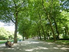 Dappled sunlight (seikinsou) Tags: brussels belgium bruxelles belgique summer park path tree avenue sunlight bench cinquantenaire