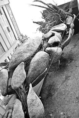 28230 (benbobjr) Tags: birmingham westmidlands midlands england uk unitedkingdom birminghamuk digbeth custardfactory benniegray custard factory gibbstreet devonshirehouse alfred bird glennhowellsarchitects glennhowells architects irishquarter deritend mediaproductioncentre arts retail shop shops shopping birdscustardfactory birdscustard medicinebar punchrecords fusedmagazine tindalstreetpress nationaltrust pressassociation terrencehigginstrust princestrust royaltownplanninginstitute siralfredfrederickbird alfredbird hamblins augustuswilliambrenchleymacerwright citygrantaward gibbsquare scotthouse advantagewestmidlands zellig oldtradesunionstudiescentre southbirminghamcollege vivid mavericktelevision northonetelevision rhubarbradio gadgetshow thegreenman tawnygray toinadams statue sculpture art outdoor