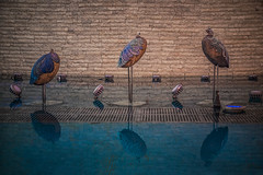 It's been awhile (Melissa Maples) Tags: antalya turkey türkiye asia 土耳其 nikon d3300 ニコン 尼康 nikkor afs 18200mm f3556g 18200mmf3556g vr summer fountain water peacocks art sculpture republicsquare cumhuriyetmeydanı reflection