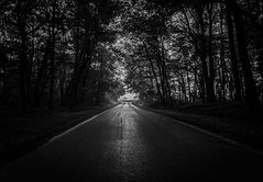Looking Foreward (michele.depaola) Tags: ifttt 500px mist landscape fog street nature light guidance tree road way shadow wood monochrome dark mystery loneliness lane panoramic solitude beauty vanishing point diminishing