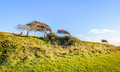 The Sound of the Wind (Francesco Impellizzeri) Tags: brighton england panasonic clouds landscape trees ngc
