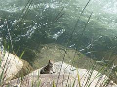 37 (T Tip) Tags: scenicphotos colorado breckenridgecolorado america mountains water lake fishing floral landscape
