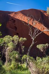 Uluru - Mutitjulu Waterhole-5