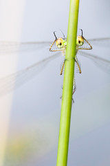 A little bit of Happy (mattgould22) Tags: bug insect animals dragonfly damselfly funny happy comical outside wet nature wildlife spring summre summer eyes face portrait canon canonuk liveforthestory rspb macro close detail