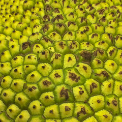 Close View Jack Fruit (cobalt123) Tags: asian leelee closeup food fruit gigantic green iphone6plus jackfruit unusual yellow bumpy texture pattern nature
