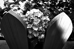 Don't fence me in (Edna Winti) Tags: ednawinti vancouver westend blooms fence shadows blackandwhite
