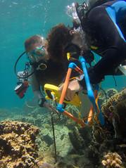 Quadrants (PacificKlaus) Tags: malapascua visayas cebu philippines underwater ocean nature scuba diving peopleandthesea survey quadrant divers