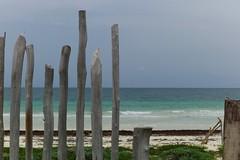 Mexican fence (•Nicolas•) Tags: caribbean vacances holidays caribe caraibes mer sea bois wood cloture barriere fence beach plage mexique mexico tulum couleur color nicolasthomas m9